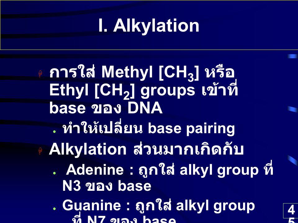 I. Alkylation การใส่ Methyl [CH3] หรือ Ethyl [CH2] groups เข้าที่ base ของ DNA. ทำให้เปลี่ยน base pairing.
